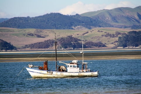 Fishing in Kawhia Harbour