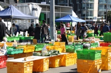 There's a city market every weekend just outside Te Papa